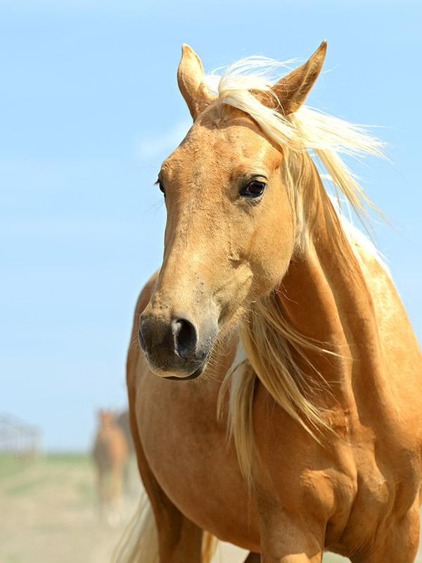 equine 3